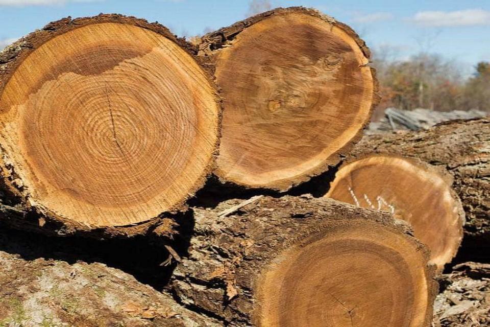 Thân gỗ óc chó tự nhiên