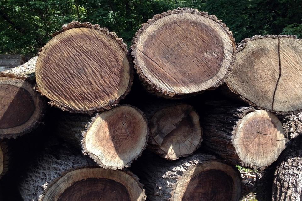 gỗ óc chó xẻ cây
